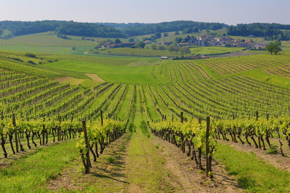 grande-champagne-vineyards