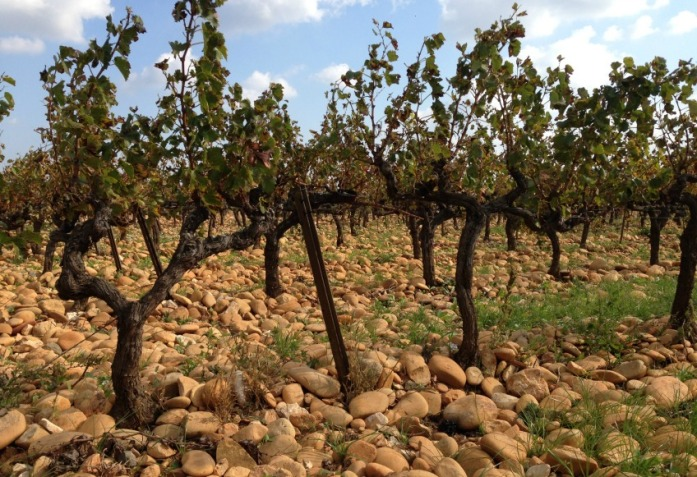 chateauneuf_du_pape_wines_2