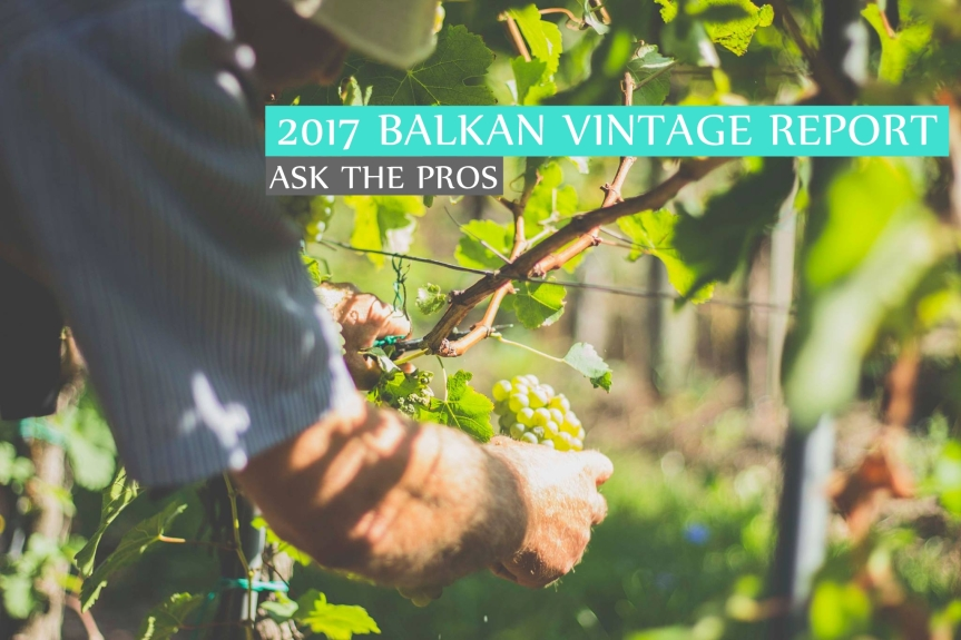 Ask the Pros: 2017 Balkan Vintage Report